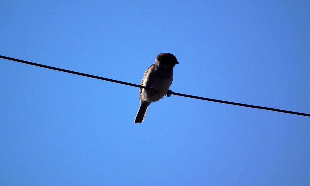 Vogel auf Netzwerkkabel
